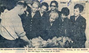 Tidningsurklipp när Blå Stjärnans deltagare lägger förband på en hund.