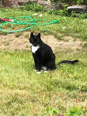 Katten Musse vilar ut på familjen Pernilla Nylander Gustafssons lantställe utanför Norrtälje efter att ha varit försvunnen i två år.
