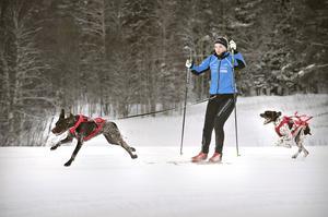 Maja Sjölund och hennes hund Wilma i fullfart.  Zigge kommer jagande efter.