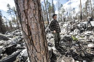 Det är en forskare på SLU, Sveriges lantbruksuniversitet, som med hjälp av campingägaren Marco Hassoldt lyckats hitta trädet där delar av brandkatastrofen startade.