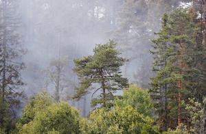 Låt ej brandröken hindra dig från att se statistiken. Foto: Nils Petter Nilsson/TT