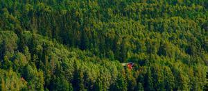 Skog kan ersätta fossila råvaror och energislag.                               Foto: TT