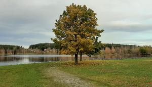 Somliga träd håller hårt i sina löv.