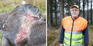 Tidigare i år har flera såriga älgar påträffats vid Sottern. Pälsen var borta och de var svaga. Leif Granlöf, som är viltinsamlare, är bekymrad över vad provresultatet ska visa. Det finns misstankar om att de har drabbats av en smittsam och dödlig sjukdom. Foto: Privat/Malin Helenius