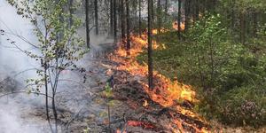 En bild från skogsbränderna sommaren 2018. Foto: Roalnd Illvesand