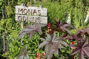 Det första landet Mona Fernros ordnade till på tomten.