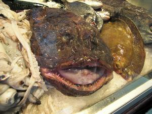Djuphavsfiskarna känns igen för att de ofta är lite fulare än andra fiskar.