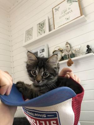 475) Här är min katt Tjorven som älskar kepsar. Foto: Amanda