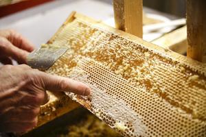Innan han slungar honungen måste han förstöra mönstren så att honungen lättare slungas ut.