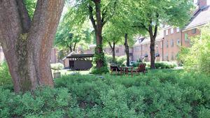Innergården i kvarteret Josef är grön och lummig.