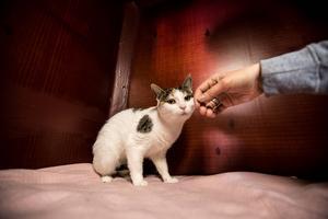 Husvilla katter kan få ett hem vid den nya ridanläggningen om kommunens planer går i lås.