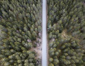 Den årliga ökningen av svensk skog behöver mer tillförsel av koldioxid än vad svenskarna släpper ut. Foto: Fredrik Sandberg / TT