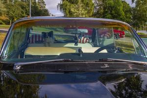 Hunden Rambo som håller vakt i sin Cadillac.