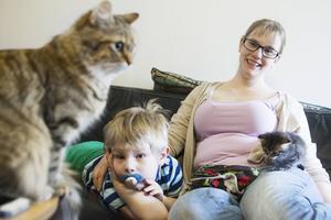 Viggo myser med mamma Sanna Jerresand och kattungen One, medan kattmamman Månen håller uppsikt.