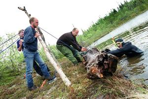 Arkivbild från 1999 när klimatforskare ledda av Björn Gunnarsson i mitten dök ned i en tjärn på en fjällsluttning nära Håckren och fiskade upp stora stockar - de visade sig vara flera tusen år gamla.