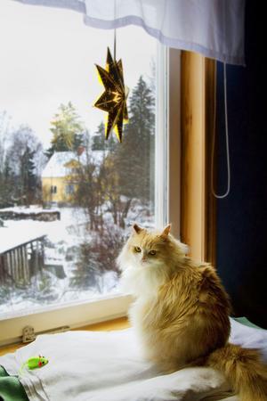 Här ser vi Smulan som blev Årets Lussekatt 2011.