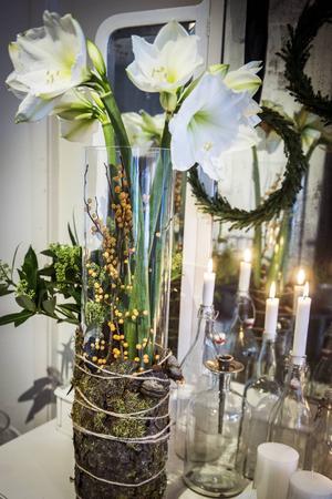 Ett vackert arrangemang med amaryllis och järnek drar ögonen till sig.
