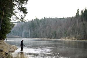 Intresset för fiske i Ljungan har över tid stadigt ökat.