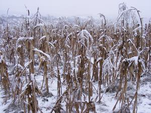 En studie som publicerades i The Lancet i maj 2015 fastställer att nästan 20 gånger fler dör av kyla än av värme. När klimatförändringarna innebär varmare klimat, räddas alltså människoliv! skriver insändaren.  Foto: Pixabay.com.