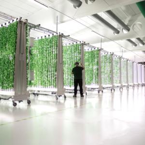Ljusgårda jobbar med automatiserad inomhusodling. Foto: Pressbild