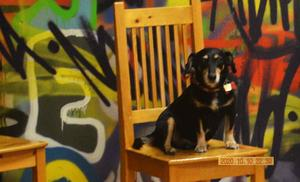 Repertoaren var tydligen i hundens smak, han satt snällt på stolen och lyssnade...