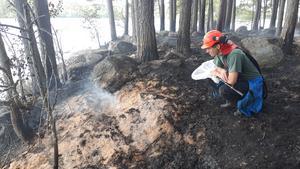 Anledningen till naturvårdsbränning är att en del arter behöver återkommande bränder för att överleva.  Foto: Anders Heurlin