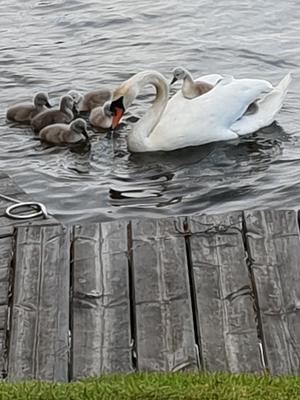 Ett gulligt möte i Åsbacka på tisdagskvällen.