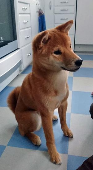 Hunden Kenzo. Ett nytt inslag i Stigbjörns liv – och krönikor. Foto: Privat