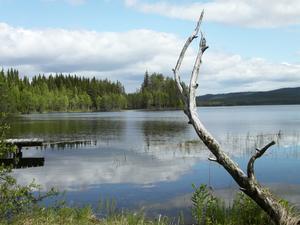Ströms Vattudal ingår i Ångermanälvens avrinningsområde. Det berörs av kommande miljövillkor för vattenkraften, där kommunstyrelsen i Strömsund sätter ned foten inför ett nytt förslag.  Bilden från Spjutviken. Foto: Evy-Ann Mattsson