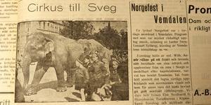 Stort intresse för elefant, ett djur som få hade sett annat än i böcker och på fotografier.