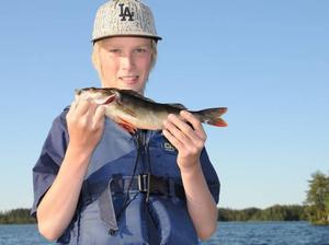 Nu är abborrfisket som bäst. Och tänk att vi har dessa delikatesser i alla våra vatten. Sebastian Wessén fångade den här fina abborren vid trollingfiske på Lundbosjön.