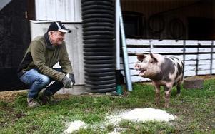 Att Årets DD-Klas är en glad prick råder det väl inga som helst tvivel om. Både till det yttre, och till det inre. – Här på Vretens Lantbruk i Arkhyttan har grisarna det väldigt bra. De växer upp under bra förhållanden och får bra lokalt odlad mat, säger Tomas Arkeberg. Foto: Bons Nisse Andersson