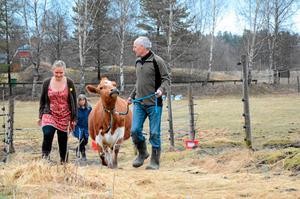 På Lantliv i Hjulsjö bor bykon Betsy. Hon är en del i byns satsning på en hållbarare framtid. På gården ska det klippas får på lördag mellan kl 10-15 och då finns också chans att möt bygdens lokala producenter och hantverkare.