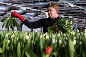 Det gäller att ha rätt knyck så att bladen lägger sig snyggt och rakt. Andreas Nilsson visa hur man gör.