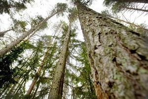 Många skogsområden är hotade.