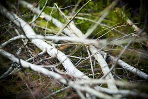 Allt från tumtjocka träd till större granar och björkar faller till förmån för en säker elleverans.
