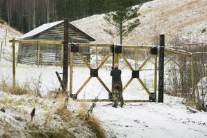 2.20 meter höga stängsel och extra eltrådar ska hålla hjortarna inne och rovdjuren ute.