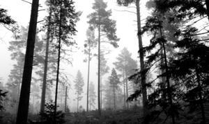 Arkivbild: Scanpix Hasse Holmberg