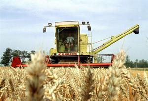 Växtdamm. Luftburna partiklar som orsakas av växter kan påverka lantbrukares hälsa negativt.