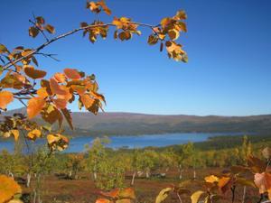 Jag har varit på min första vandringsresa nu i september i Saltoluokta och sett när naturen där uppe förvandlats från grönt till höstens färger på några dagar, helt fantastiskt.