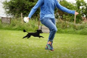 När Malin Tangfelt och hunden Hippi tränar agility går det undan.