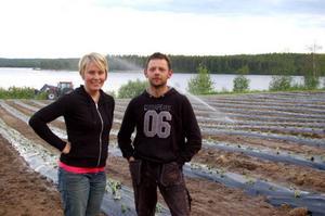 Susanne Brunnsberg och Mikael Jonasson vid jordgubbsodlingarna på sitt lantbruk i Härjeåsjön. Nu utökar de sin verksamhet. Foto: Carin Selldén