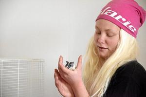 Uppfödare. Linda Widmarks gerbilråttor säljs i år till förmån för Musikhjälpen som samlar in pengar för alla tjejers rätt att överleva sin graviditet.Foto: Sofia Gustafsson