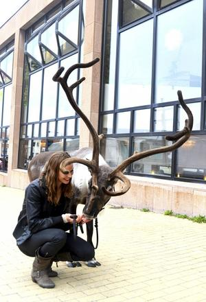 Entreprenören och djurtränaren Ulrika Andreasson tillsammans med renen Rudolf.