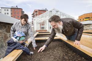 Åsa och Johan hoppas att de skall få möjlighet att odla vid det fina växthuset vid Nordanby äng.