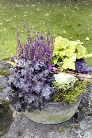 Plantering med två färger av alunrot, ljung, mossa och fina pinnar.
