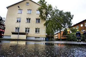 ovädrets verkningar. Ett träd föll mot ett hus på Hantverkargatan när ovädret drog in över Gävle.