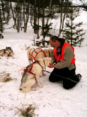 En veterinär kontrollerar att hundarna mår bra på en checkpoint  i Lofsdalen.  Foto: Annica Korsby