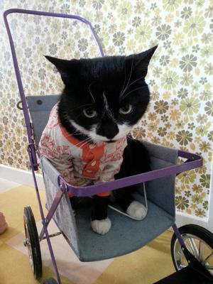 Katten Pedro iklädd bebiskläder.