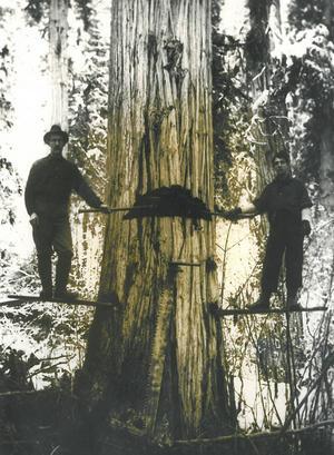 Många av länsborna hade bakgrund inom skogsbruk, vilket passade utmärkt in i Kanadas expanderande skogsindustri.